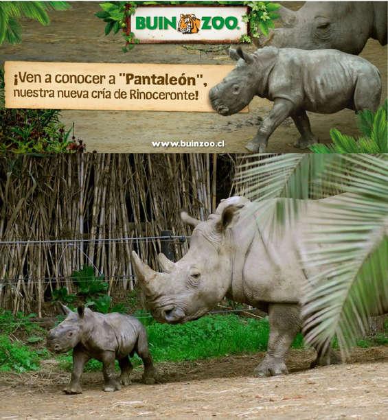 Ofertas de Buin Zoo, Conoce a Pantaleón